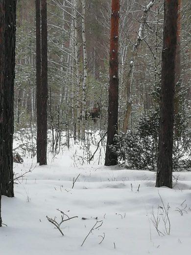 Работы по подкормке зверей зимой продолжаются